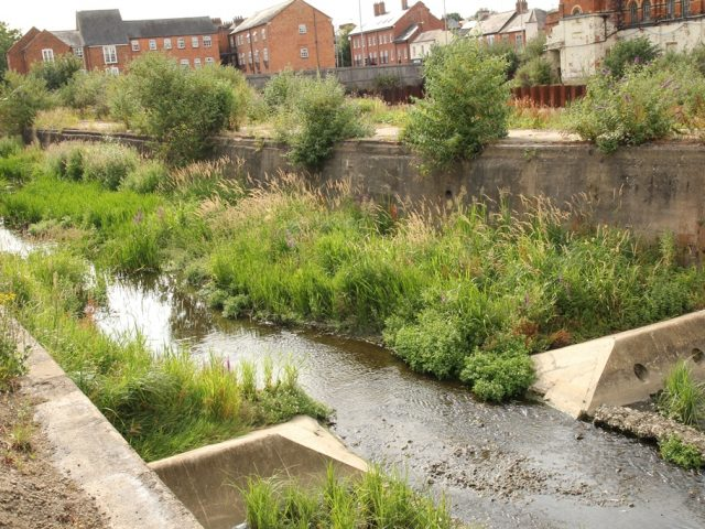 Fish can now migrate along the river with the removal of the weir at Edwin Court.