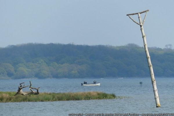 Perches for re-introduced Osprey at Rutland Water.