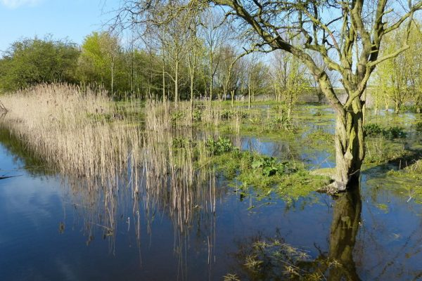 Re-creation of fen habitat at Willow Tree Fen.